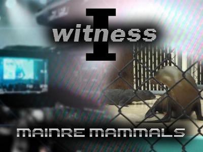 I Witness: Marine Mammals